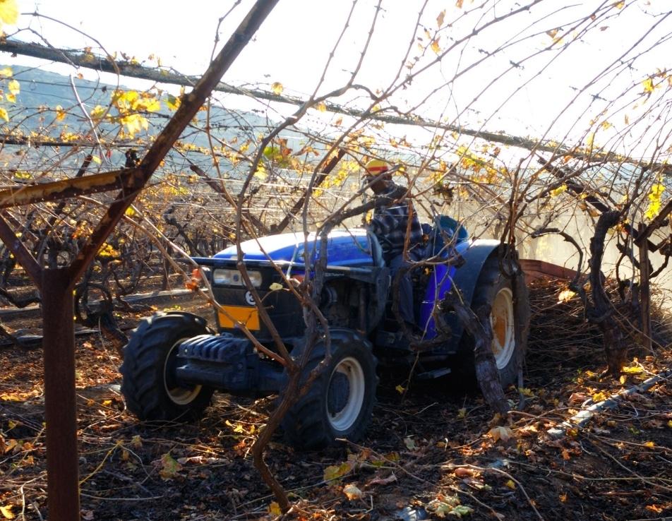 Travaux viticole effectué par un prestataire sur un tracteur, il taille les vignes